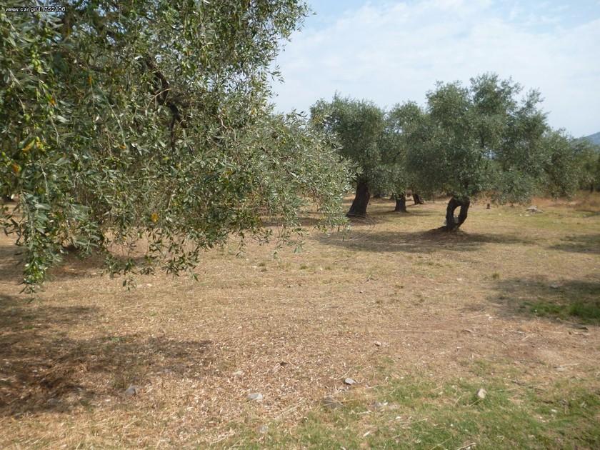 Αγροτεμάχια 2.450τ.μ. πρoς αγορά-Ξάνθη