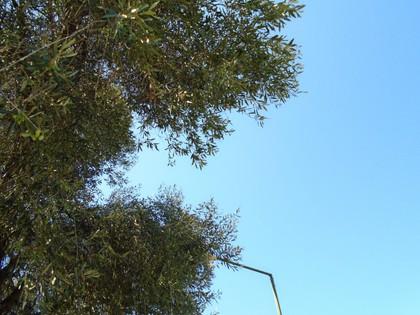 Αγροτεμάχια 33.000τ.μ. πρoς αγορά-Κέρκυρα » Φαίακες