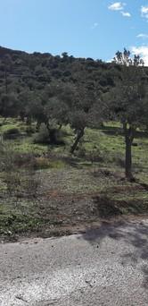 Αγροτεμάχια 1.653τ.μ. πρoς αγορά-Κορωπί » Κέντρο