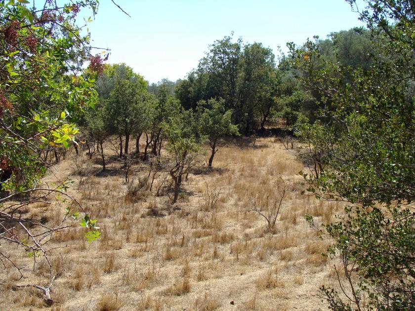 Αγροτεμάχια 1.757τ.μ. πρoς αγορά-Χίος » Αμάνη