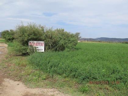 Αγροτεμάχια 15.000τ.μ. πρoς αγορά-Λέσβος - πλωμάρι » Πλατανέλι
