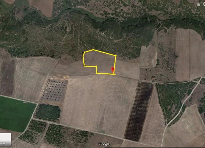 Αγροτεμάχια 14.025τ.μ. πρoς αγορά-Πολυδάμαντας » Κάτω βασιλικά
