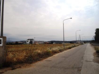 Οικόπεδο 12.250τ.μ. πρoς αγορά-Αλεξανδρούπολη » Παλαγία