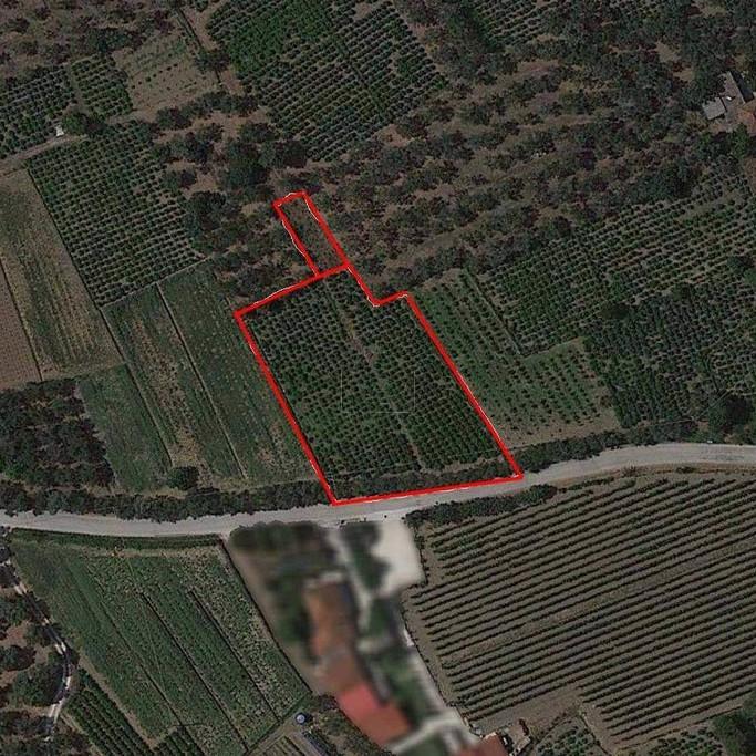Αγροτεμάχια 2.610τ.μ. πρoς αγορά-Αρτεμίσιο