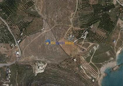 Αγροτεμάχια 16.351τ.μ. πρoς ενοικίαση-Λεύκη » Ξερόκαμπος