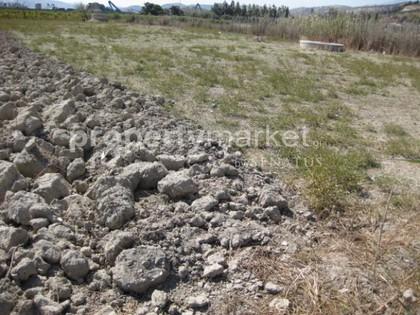 Αγροτεμάχια 2.300τ.μ. πρoς ενοικίαση-Ηράκλειο κρήτης » Φοινικιά