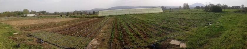 Αγροτεμάχια 13.500τ.μ. πρoς ενοικίαση-Γαλλικός » Μάνδρες