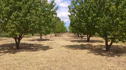 Αγροτεμάχια 4.000τ.μ. πρoς αγορά-Γοργοπόταμος » Νέο κρίκελλο