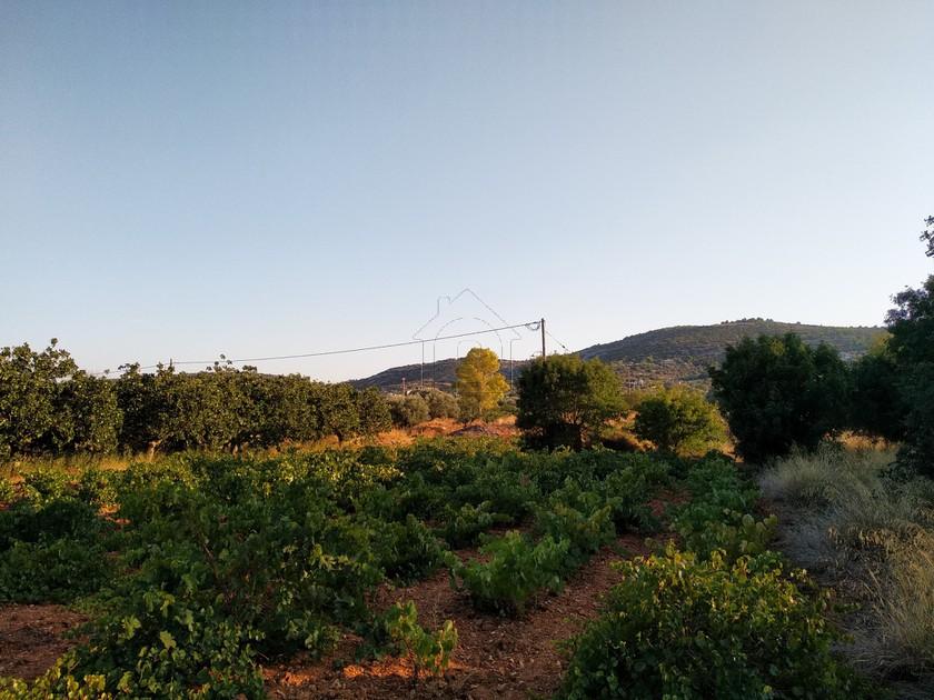 Αγροτεμάχια 4.016τ.μ. πρoς αγορά-Κορωπί » Κέντρο