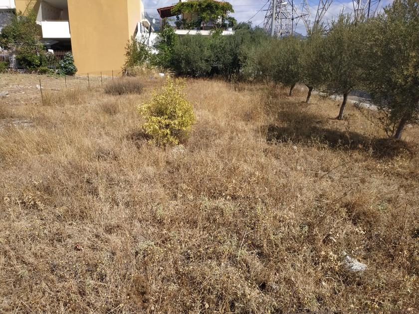 Οικόπεδο 360τ.μ. πρoς αγορά-Αχαρνές » Άγιος πέτρος