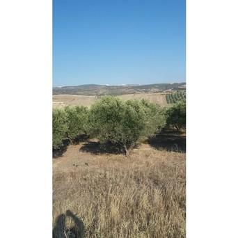 Αγροτεμάχια 17.000τ.μ. πρoς ενοικίαση-Θέρμη » Άγιος αντώνιος