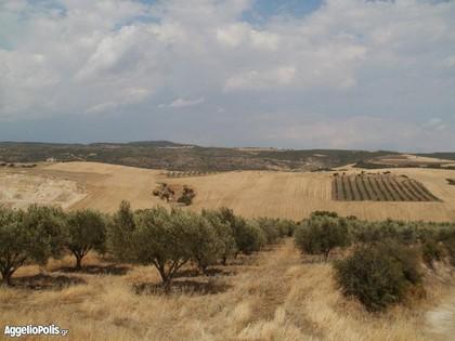 Αγροτεμάχια 17.000 τ.μ. πρoς ενοικίαση, Θεσσαλονίκη - Περιφ/Κοί Δήμοι, Θέρμη-thumb-10