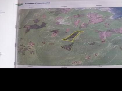 Αγροτεμάχια 26.000τ.μ. πρoς αγορά-Σηπιάδα » Ροδιά
