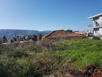 Οικόπεδο 229τ.μ. πρoς αγορά-Χανιά » Μετόχι μπάρμπου
