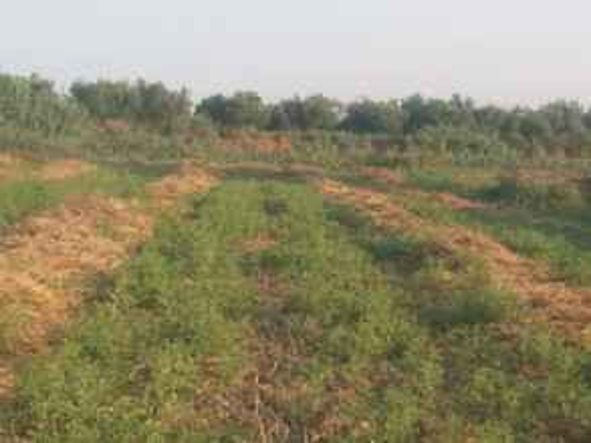 Αγροτεμάχια 10.000τ.μ. πρoς ενοικίαση-Περιοχη χώρας » Αμπελόκηποι