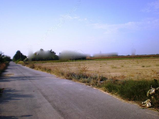 Οικόπεδο 7.000τ.μ. πρoς αγορά-Αμαλιάδα » Κουρούτας