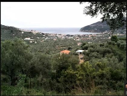 Αγροτεμάχια 4.329τ.μ. πρoς αγορά-Σκόπελος » Χώρα