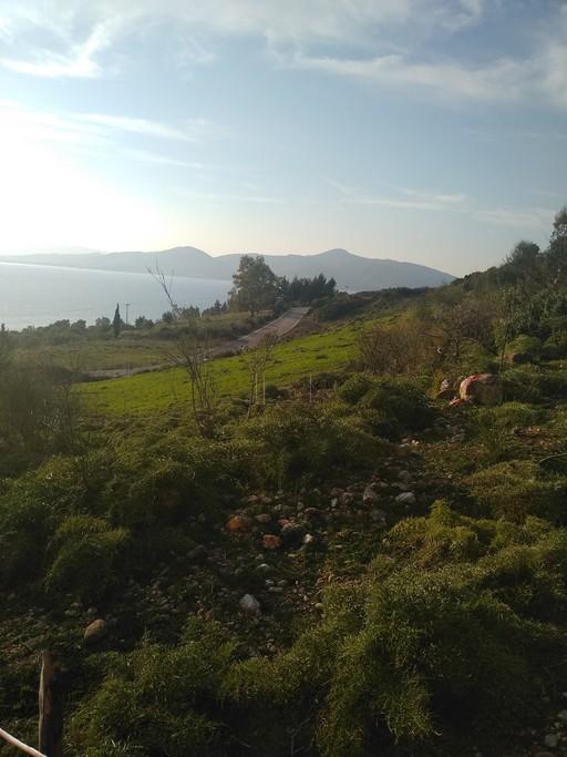 Αγροτεμάχια 4.600τ.μ. πρoς αγορά-Κεκροπία (παλαίρου) » Πάλαιρος