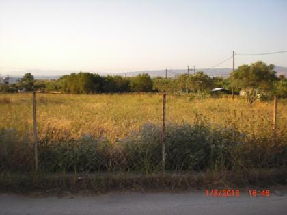 Αγροτεμάχια 3.800τ.μ. πρoς αγορά-Καλλικράτεια » Νέα καλλικράτεια