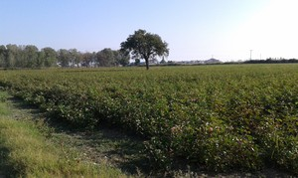 Αγροτεμάχια 10.952τ.μ. πρoς αγορά-Παραλία