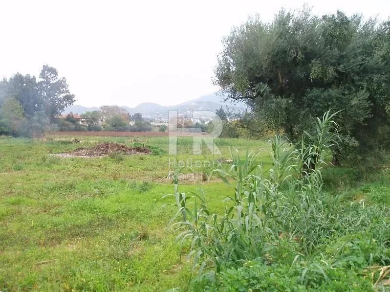 Οικόπεδο 8.000τ.μ. πρoς ενοικίαση-Πάτρα » Προάστιο