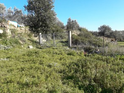 Αγροτεμάχια 8.200τ.μ. πρoς ενοικίαση-Βοϊων » Μεσοχώρι