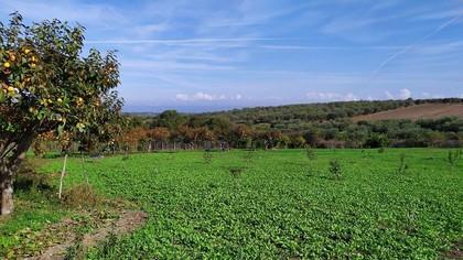 Φάρμα / ράντσο 7.000τ.μ. πρoς αγορά-Πύδνα » Σφενδάμι