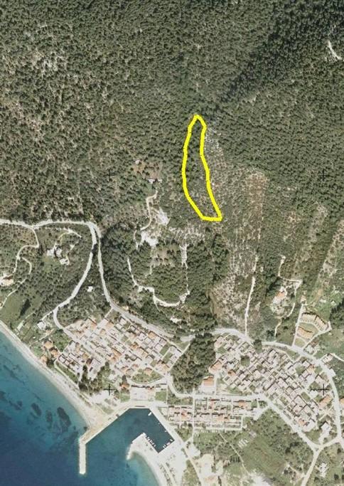 Αγροτεμάχια 1.044.514τ.μ. πρoς αγορά-Σκόπελος » Νέο κλήμα