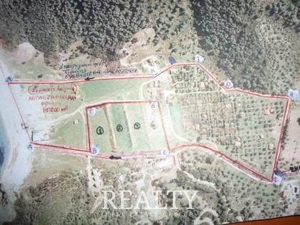 Αγροτεμάχια 47.000τ.μ. πρoς αγορά-Σκιάθος » Χώρα