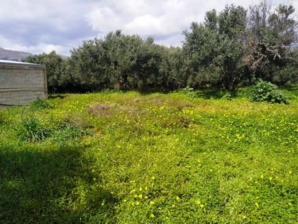 Αγροτεμάχια 1.700τ.μ. πρoς αγορά-Ιεράπετρα » Επισκοπή