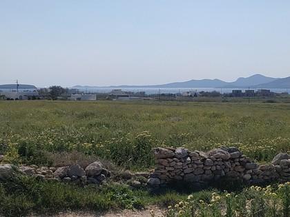 Αγροτεμάχια 12.000τ.μ. πρoς αγορά-Πάρος » Κάμπος