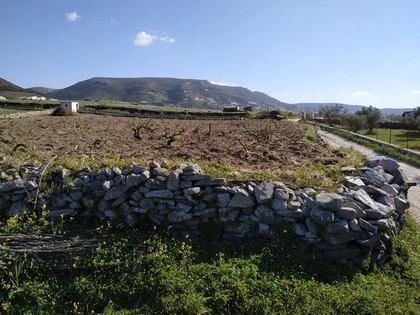 Αγροτεμάχια 3.500τ.μ. πρoς αγορά-Πάρος » Άγιος χαράλαμπος