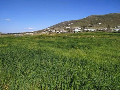 Αγροτεμάχια 5.570τ.μ. πρoς αγορά-Πάρος » Άγιος χαράλαμπος