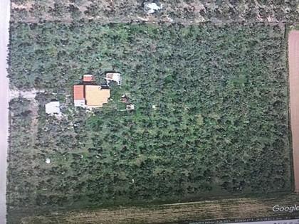 Αγροτεμάχια 8.460τ.μ. πρoς αγορά-Καβάλα » Λεύκη