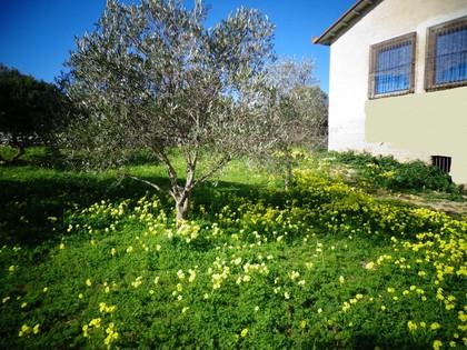 Μονοκατοικία 82τ.μ. πρoς αγορά-Χίος » Μαστιχοχώρια