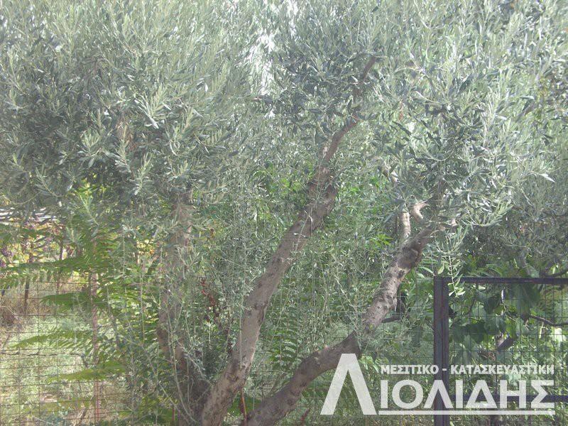 Αγροτεμάχια 4.100τ.μ. πρoς αγορά-Σιθωνία