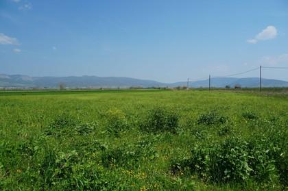 Αγροτεμάχια 7.000τ.μ. πρoς αγορά-Τιθορέα » Αγία παρασκευή