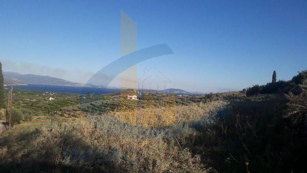 Οικόπεδο 9.600τ.μ. πρoς αγορά-Ασίνη » Αγία παρασκευή