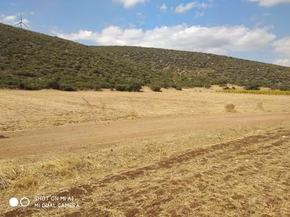 Αγροτεμάχια 14.500τ.μ. πρoς αγορά-Ορχομενός » Παύλος