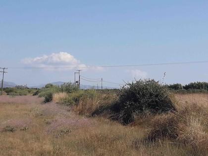 Αγροτεμάχια 22.405τ.μ. πρoς ενοικίαση-Έλος » Αστέρι