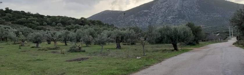 Αγροτεμάχια 1.653τ.μ. πρoς ενοικίαση-Κορωπί » Κέντρο