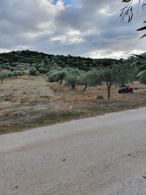 Αγροτεμάχια 1.653 τ.μ. πρoς ενοικίαση, Αθήνα - Ανατολικά Προάστια, Κορωπί-thumb-1