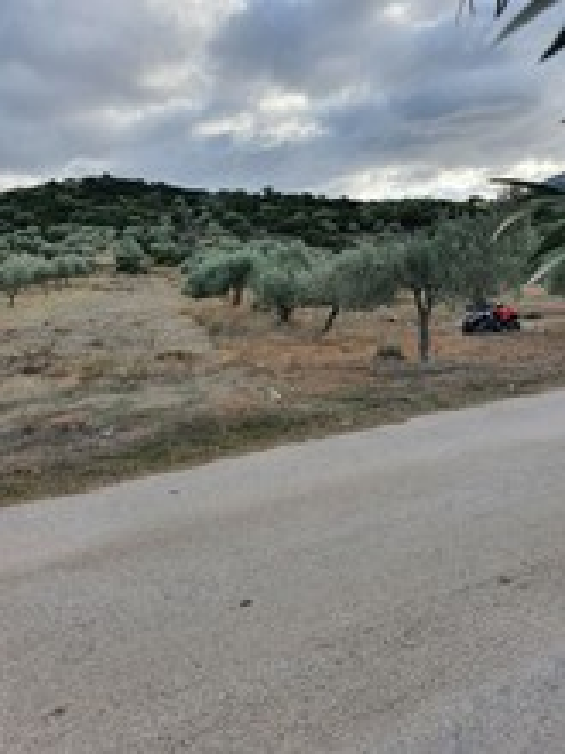 Αγροτεμάχια 1.653 τ.μ. πρoς ενοικίαση, Αθήνα - Ανατολικά Προάστια, Κορωπί-thumb-2