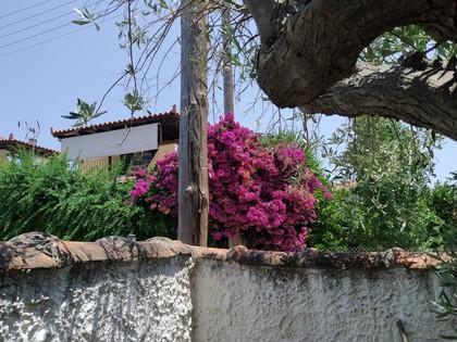 Οικόπεδο 750τ.μ. πρoς αγορά-Αρτέμιδα (λούτσα) » Γαλήνη