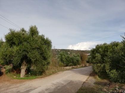 Οικόπεδο 1.388τ.μ. πρoς αγορά-Άγιος νικόλαος » Φιορέτζηδες