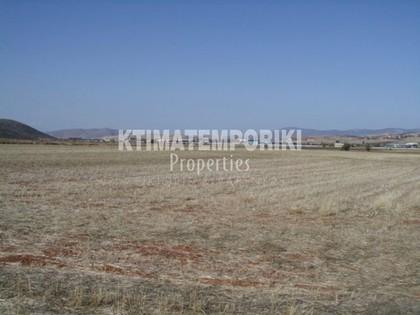 Αγροτεμάχια 50.000τ.μ. πρoς αγορά-Θήβα » Ελαιώνας