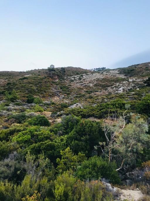 Αγροτεμάχια 10.000τ.μ. πρoς αγορά-Ικαρία » Εύδηλος