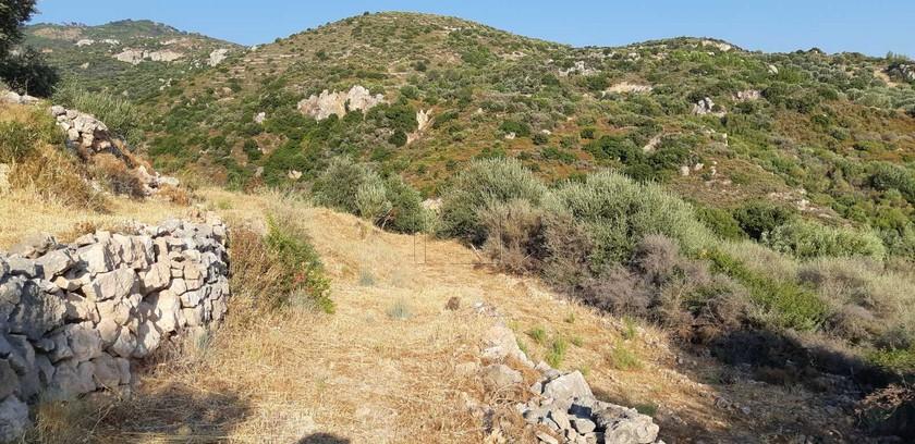 Αγροτεμάχια 4.500τ.μ. πρoς αγορά-Σάμος » Μαραθόκαμπος