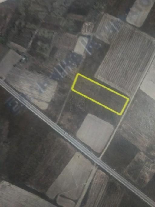 Αγροτεμάχια 6.800τ.μ. πρoς ενοικίαση-Καλλίφωνο » Ζαΐμι