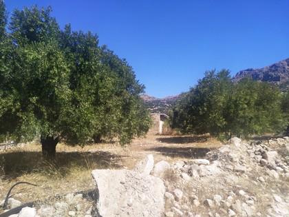 Αγροτεμάχια 1.200τ.μ. πρoς αγορά-Ιεράπετρα » Μακρυλιά